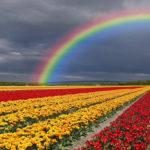 Top 10 Beautiful Gardens on the Earth Planet | Beautiful Gardens