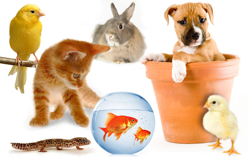 Common Household Pets
