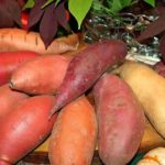 The Healthy side of eating Sweet Potato