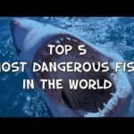 Top 5 Most Dangerous Fish the World Has Ever Witnessed