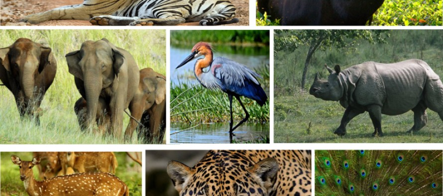 essay on wildlife in india This is a short essay on wildlife conservation for students - probably more senior students if you like it, or parts of it, feel free to copy or use it in any way you wish under a creative commons license.