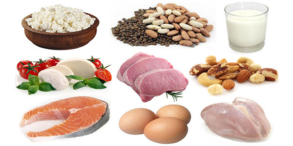 Top  High Biological Protein Foods