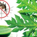 A list of 11 Beneficial Juices for Dengue Fever