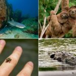 15 Living Creatures In Costa Rica Corcovado National Park which you should see