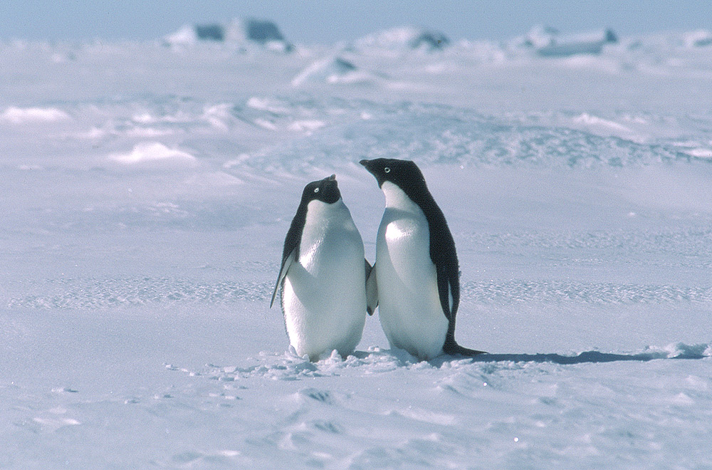 10 Top Reasons for Visiting Antarctica | Antarctica Travel